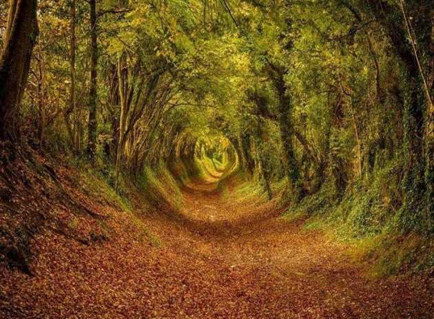 15 Amazing Tree Tunnels Ashdown Forest, West Sussex