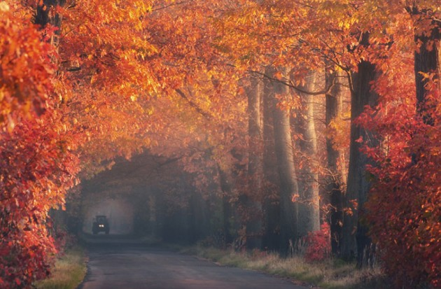 15 Amazing Tree Tunnels  Autumn Tunnel.