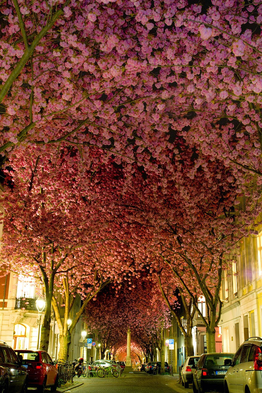 15 Amazing Tree Tunnels  Street in Bonn, Germany