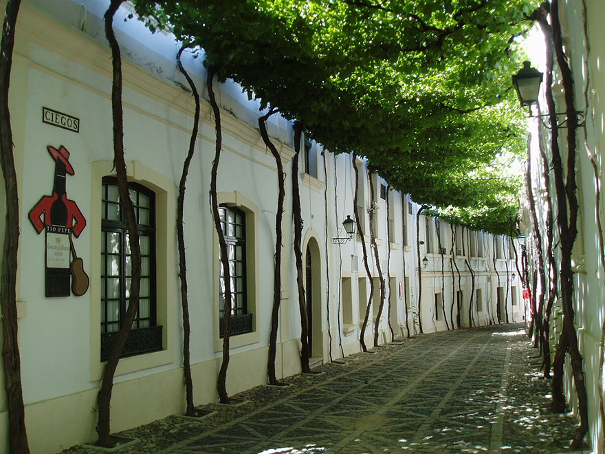 15 Amazing Tree Tunnels Street in Jerez, Spain