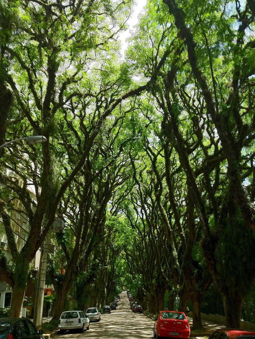 15 Amazing Tree Tunnels Street in Porto Alegre, Brazil