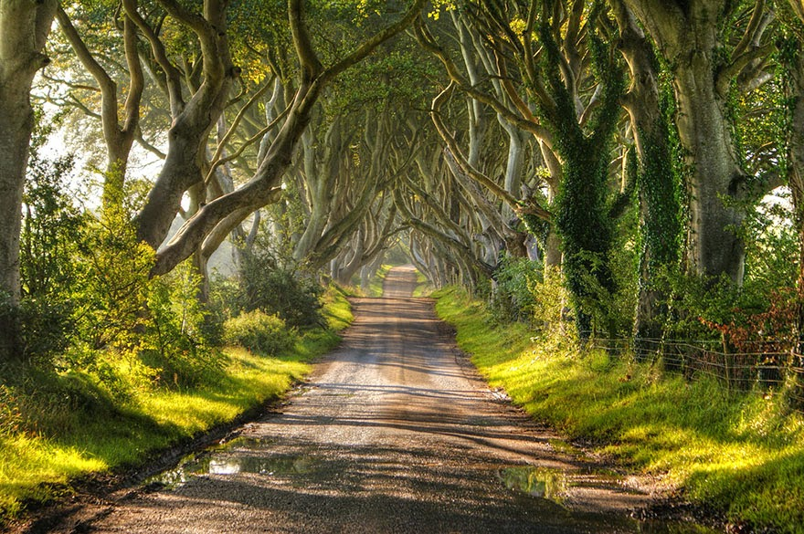 15 Amazing Tree Tunnels The Dark Hedges in Northern Ireland