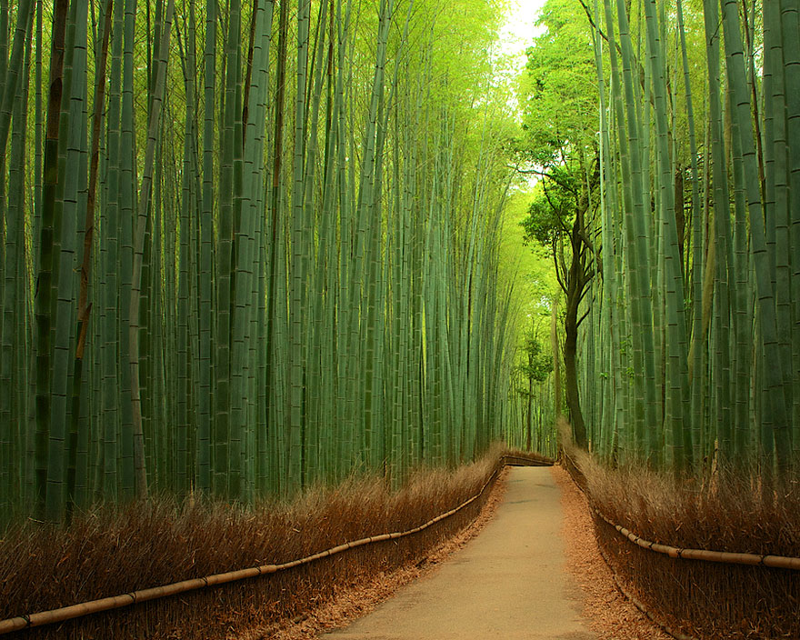 15 Amazing Tree Tunnels  Tree Bamboo Path in Kyoto, Japan