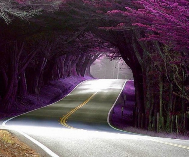 15 Amazing Tree Tunnels Tree Tunnel in Portugal