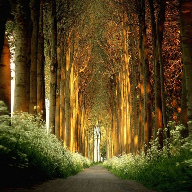 15 Amazing Tree Tunnels  Tree Tunnel in the Netherlands