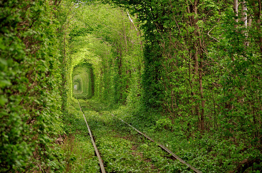 15 Amazing Tree Tunnels Tunnel of Love in Ukraine